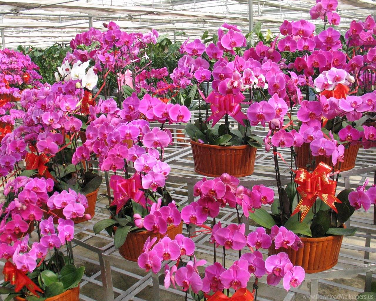 Recipientes y sustratos para orquídeas
