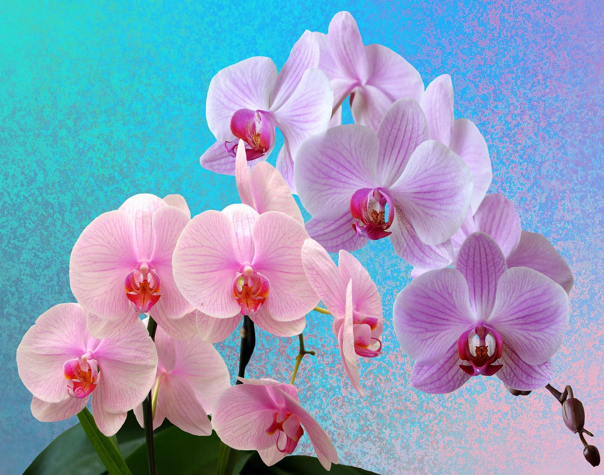 Iluminación de las orquídeas