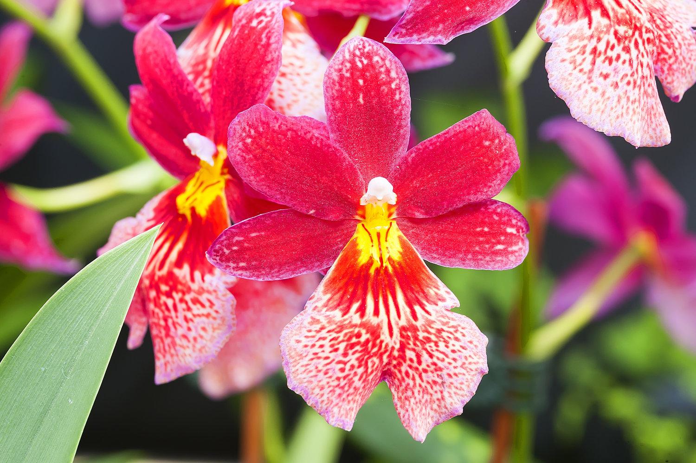 Qué son las orquídeas